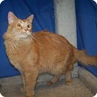 Adopt A Pet :: K-Talia4-Scotty - Colorado Springs, CO