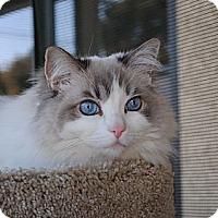Adopt A Pet :: Thelma - Palmdale, CA