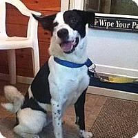 Adopt A Pet :: Suzie - Fort Hunter, NY