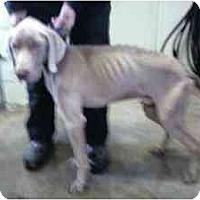 Adopt A Pet :: Jeb aka Hunter - Attica, NY