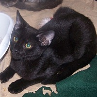 Adopt A Pet :: Cinder - Concord, NC