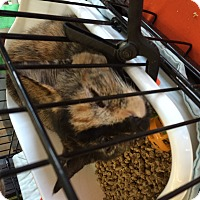Adopt A Pet :: Ladies - Clay, NY