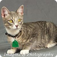 Adopt A Pet :: Minka - Edmond, OK