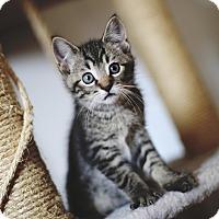 Adopt A Pet :: Shinji - Chicago, IL