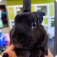 Adopt A Pet :: Roscoe - Los Angeles, CA