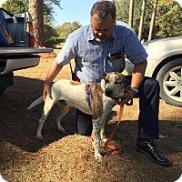 Adopt A Pet :: Clooney - Marianna, FL