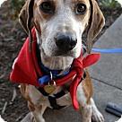 Adopt A Pet :: Talulah