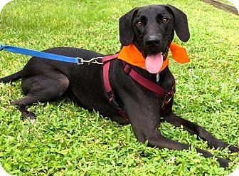 Adopt A Pet :: Ready, Set, Go!!  - Ft Myers Beach, FL