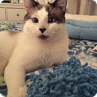 Adopt A Pet :: Palmer - Fullerton, CA