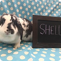 Adopt A Pet :: Shelly - Columbus, OH