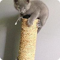Adopt A Pet :: Avery - Monroe, GA