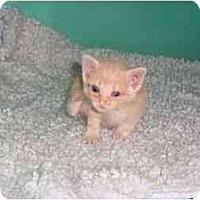 Adopt A Pet :: Terri - Secaucus, NJ