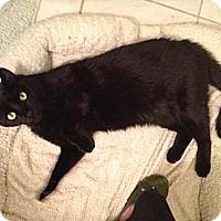 Adopt A Pet :: Alex - Chicago, IL
