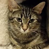 Adopt A Pet :: Kaylie - Montreal, QC