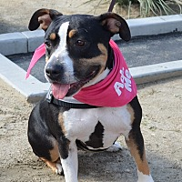 Adopt A Pet :: Buttercup - Palm Springs, CA