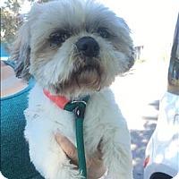 Adopt A Pet :: Eclair - Encino, CA
