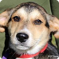 Adopt A Pet :: Willow - Bedford, VA