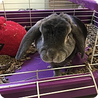 Adopt A Pet :: Mr. Nibbles - Red Wing, MN