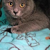 Adopt A Pet :: Paloma - Hermosa Beach, CA