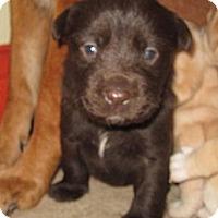 Adopt A Pet :: Radar - Copperas Cove, TX