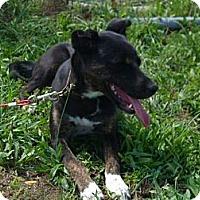 Adopt A Pet :: Piper - Windsor, MO