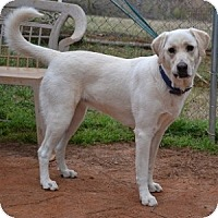 Adopt A Pet :: Vanna - Athens, GA