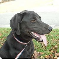 Adopt A Pet :: Grady - Covington, KY
