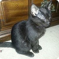Adopt A Pet :: Timber - Monroe, GA