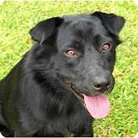 Adopt A Pet :: Baby - Kingwood, TX