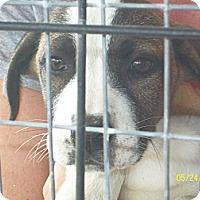 Adopt A Pet :: Whitney - Mexia, TX