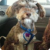 Adopt A Pet :: Jules - Encinitas, CA