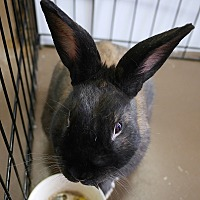 Adopt A Pet :: Chase - Montclair, CA