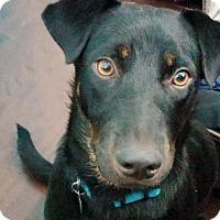 Adopt A Pet :: Delilah - Marietta, GA