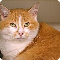 Adopt A Pet :: Dani - Byron Center, MI