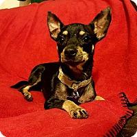 Adopt A Pet :: Kanga - Houston, TX