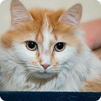 Adopt A Pet :: Joli - Fountain Hills, AZ