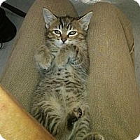 Adopt A Pet :: Fern - Sterling Hgts, MI