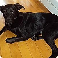 Adopt A Pet :: Tish - Hamilton, ON