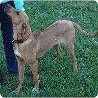 Adopt A Pet :: Ridge--pending - New Richmond, OH
