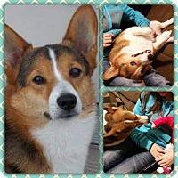 Adopt A Pet :: Radar - Greeley, CO