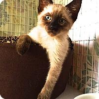 Adopt A Pet :: James - Davis, CA