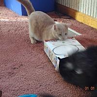 Adopt A Pet :: Sage - Saint Albans, WV