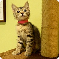 Adopt A Pet :: Nora - The Colony, TX