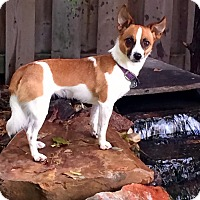 Adopt A Pet :: Tessa - Woodstock, ON