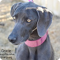 Adopt A Pet :: Gracie - Alliance, NE