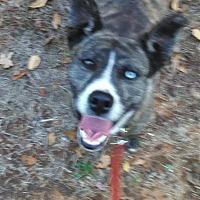 Adopt A Pet :: Joni - Augusta, GA
