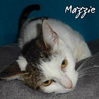 Adopt A Pet :: WV - Mazzie (MCR) - Lambertville, MI