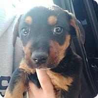 Adopt A Pet :: April - Bernardston, MA