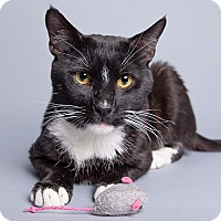 Adopt A Pet :: Zoisite - Wilmington, DE