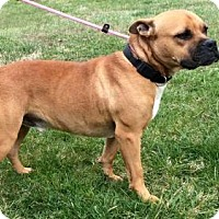 Adopt A Pet :: DANNY BOY - Andover, CT
